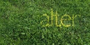 Fresh grass closeup